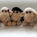 černá ovce rodiny